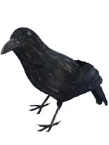 Black Crow plumes réaliste Accessoire Halloween