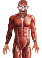 Anatomie homme Costume Halloween Costume Homme