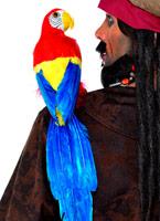 20 pouces Parrot Accessoire de Pirate